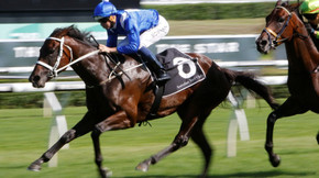Winx could touch even money as Doncaster grip continues to tighten