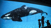 Court upholds ruling against SeaWorld over trainer safety