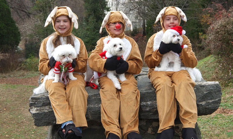 The cuteness factor is over the moon at the Atlanta Botanical Garden's Reindog Parade.