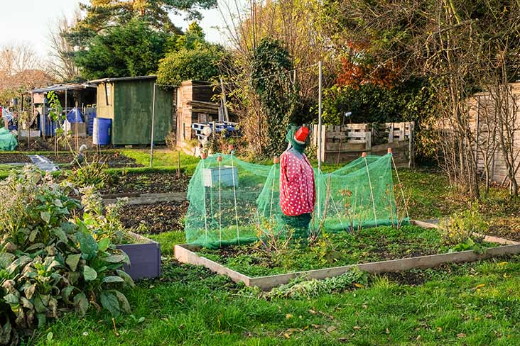 Scarecrow at the allotments
