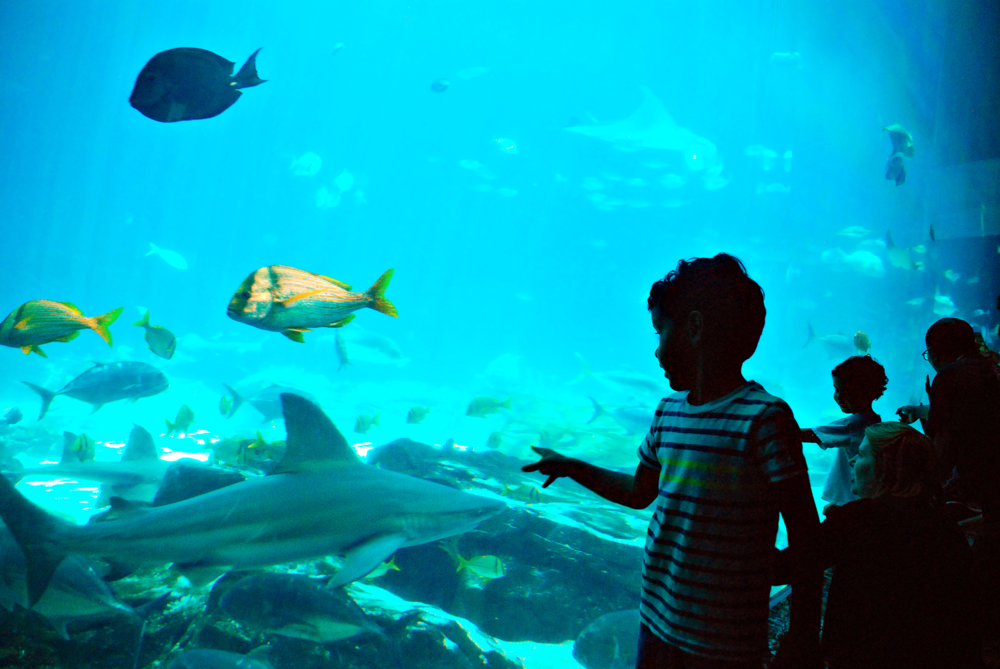 Georgia Aquarium Atlanta_Joleen Pete Photography