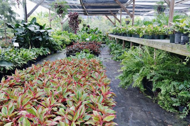 ohdeardrea+carnival+plants+grand+cayman+.jpg.jpeg