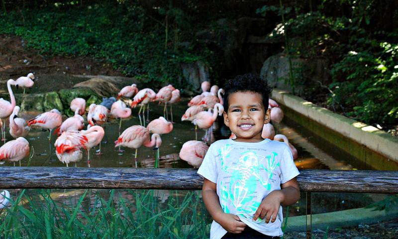 Your adventurous little cub will love Adventure Cubs at Zoo Atlanta.