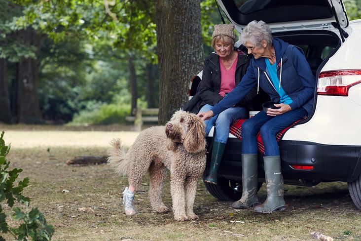 Motability Scheme customers dog walking