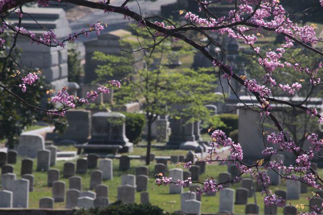 Atlanta-Oakland-Cemetery-Daylight-Landscape
