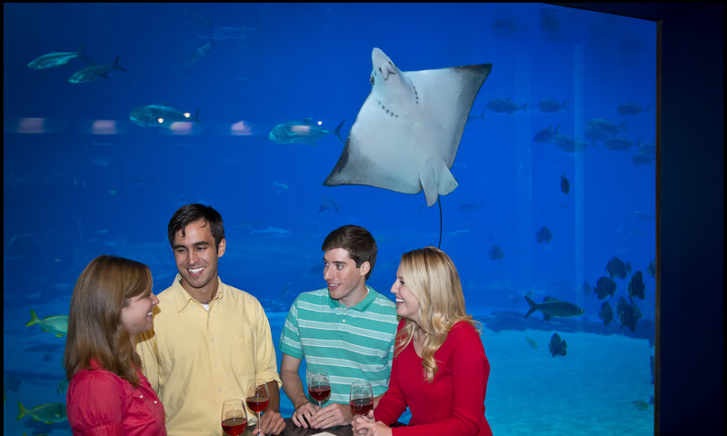 Shamrocks and stingrays. Must be time for St. Patricks Day Sips Under the Sea. (photo Georgia Aquarium)