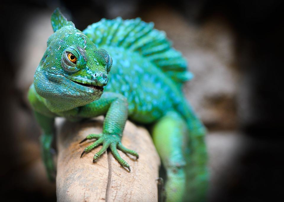 reptile-2042906_960_720.jpg