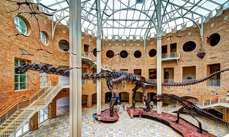 Walk among the dinosaur bones at Fernbank. (Gene Phillips)