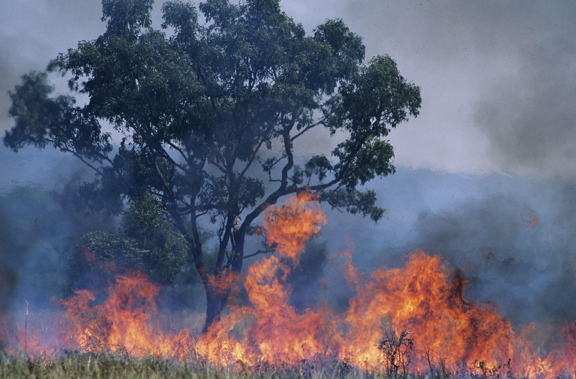 オーストラリア の 山 火事