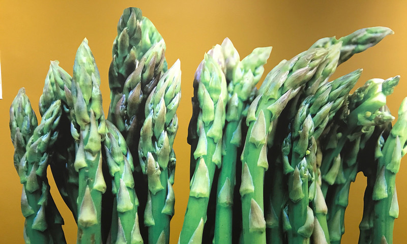 The new exhibit at MODA is all about freshness.