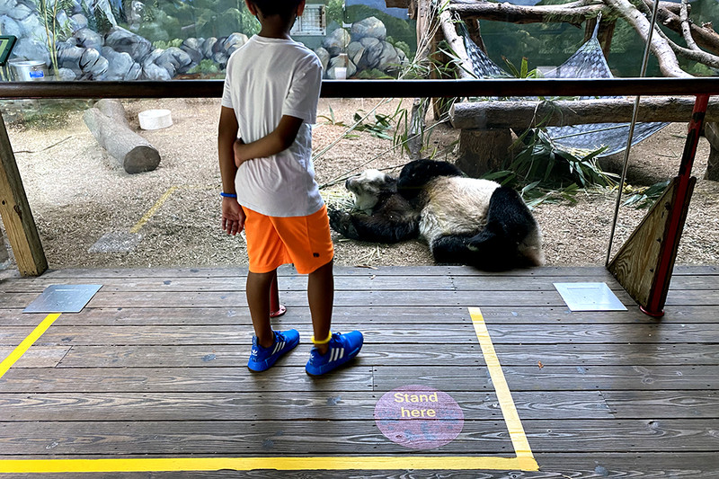 Visit your favorite furry friends at Zoo Atlanta with an Atlanta CityPASS.