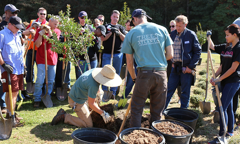 Help the environment by planting a tree with Trees Atlanta.