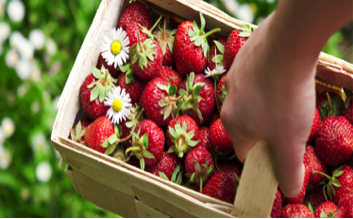 strawberries in basket.png