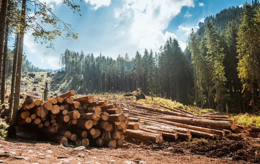 メインビジュアル : 森林の害虫被害対策からファッションのトレンド予測までーAIによる業務効率化