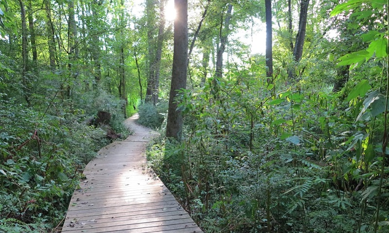 Atlanta's Morningside Nature Preserve is a welcome outdoor retreat just seven miles from downtown. (Jim Hodgson)