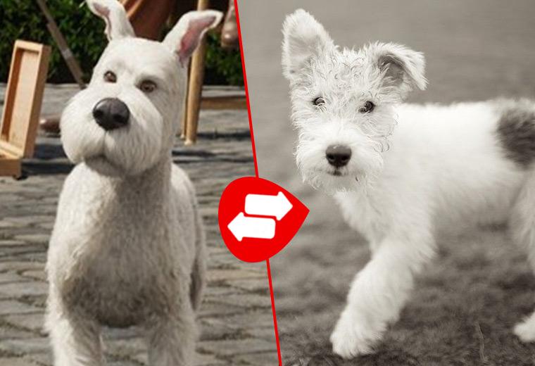 cartoon-dogs-14.jpg